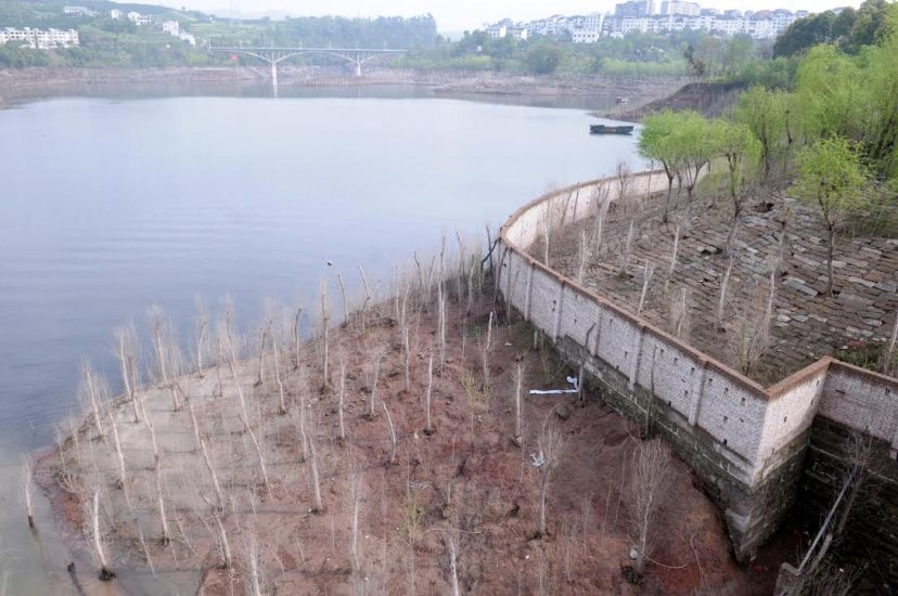 The reservoir area's drawdown zone in Shibaozhai in Zhongxian County, one of the well-known attractions in the Three Gorges reservoir area, where many of the trees along the riverbank died after the reservoir water level dropped, by Fan Xiao, March 2012.