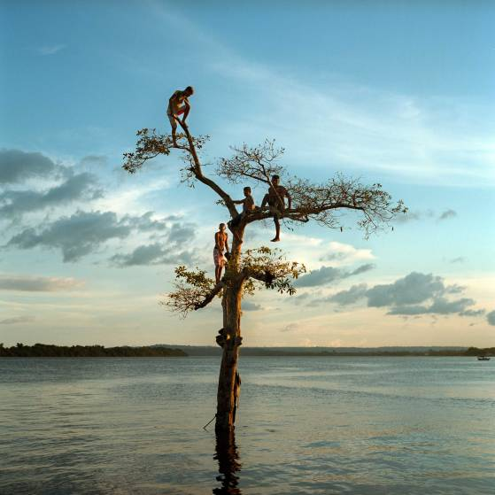 March 29, 2014. A group of boys climb a tree on the Xingu River by the city of Altamira, Brazil. One third of the city will be permanently flooded by the nearby Belo Monte Dam. Aaron Vincent Elkaim.
