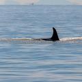 whale-watchers-three