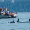 whale-watchers